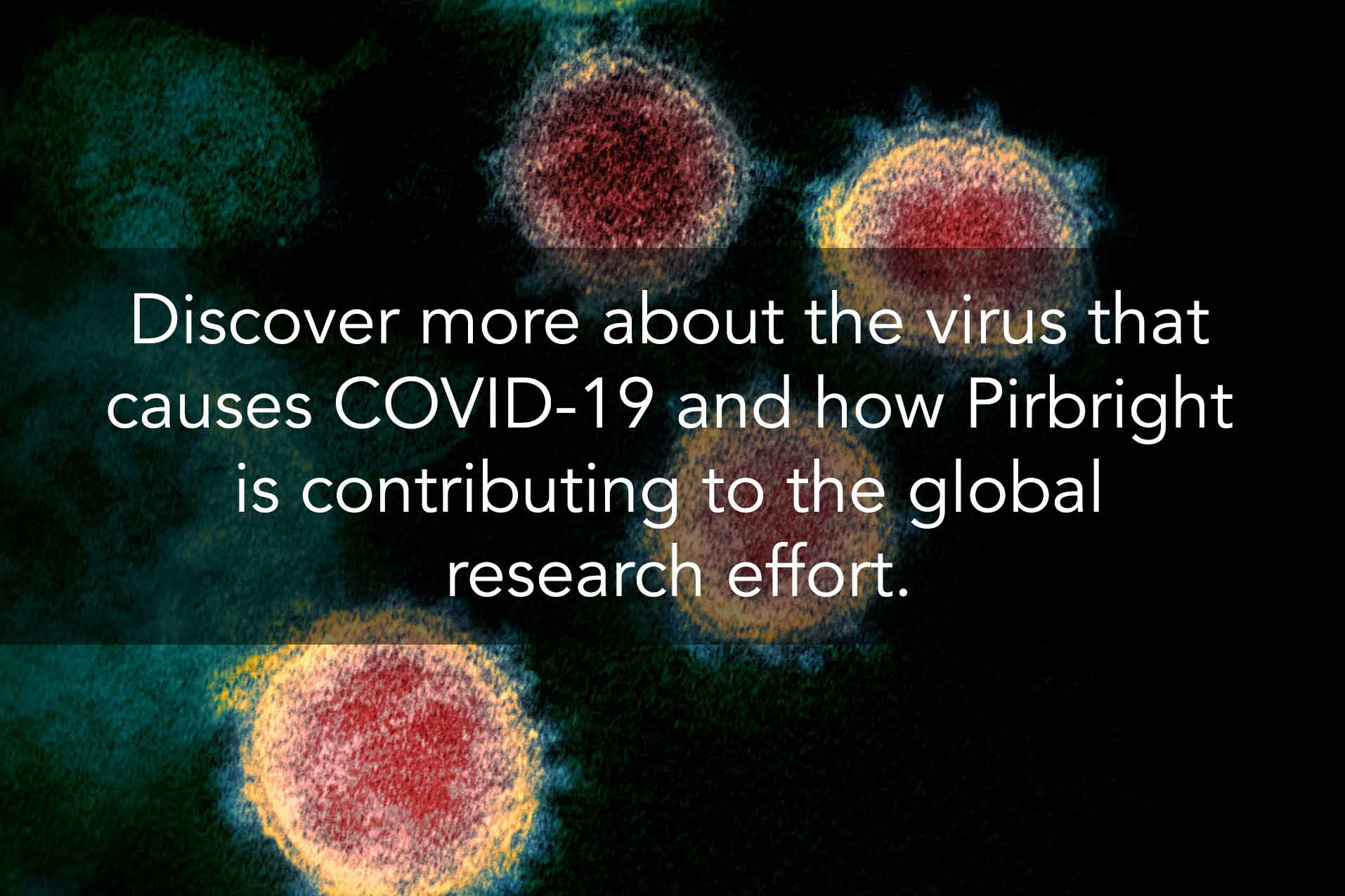 covid 19 sars-cov-2 page link - Discover more about the virus that  causes COVID-19 and how Pirbright  is contributing to the global  research effort.