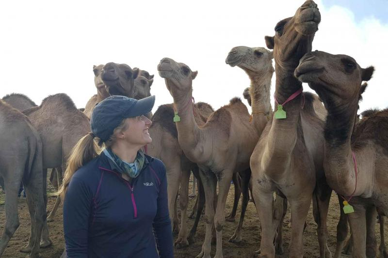 Camels in the RVF trials in Kenya