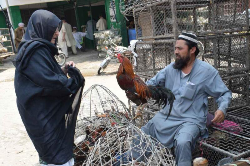 Trading poultry in a pakistani village