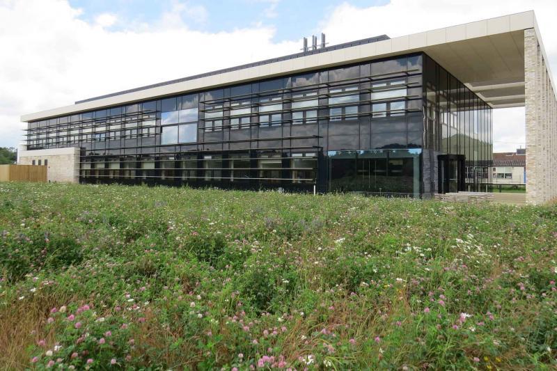 Wildflower meadow beside The Jenner Building