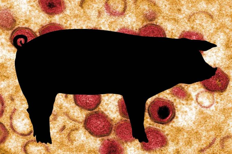 A black outline of a pig on a background that shows red ASF virus particles