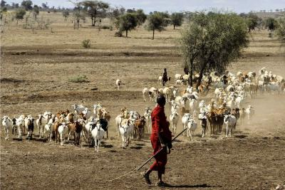Goats being herded by Maasai