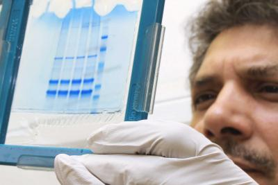 Professor Munir Iqbal looking at results from influenza vaccine research