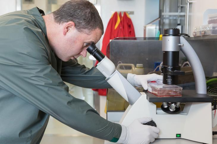Scientist in laboratory at microscope