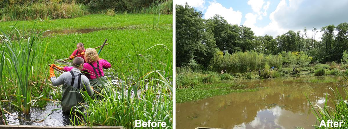 Before and after of the pond clearing