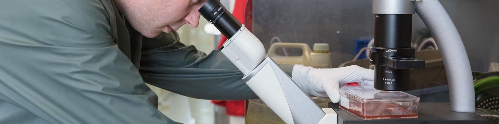 Man looking microscope at bench in lab