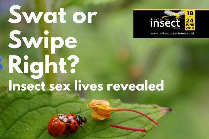 National Insect week swat or swipe right