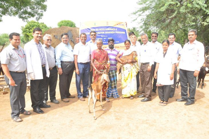 Peste-des-petits ruminants vaccine differentiation group from Pirbright in Chennai, India