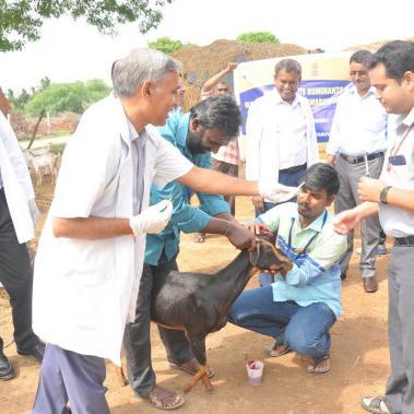 PPR vaccine campaign