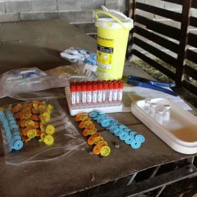 vaccine trial CCHF bulgaria